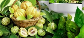 great things about Garcinia Cambogia outcomes