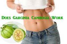 Does garcinia cambogia work