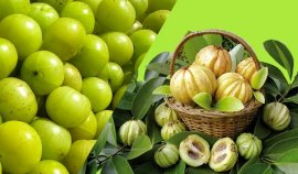 element of Garcinia Cambogia