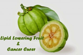 Lipid Lowering fruit and A Cancer curer - Garcinia Cambogia | Truweight