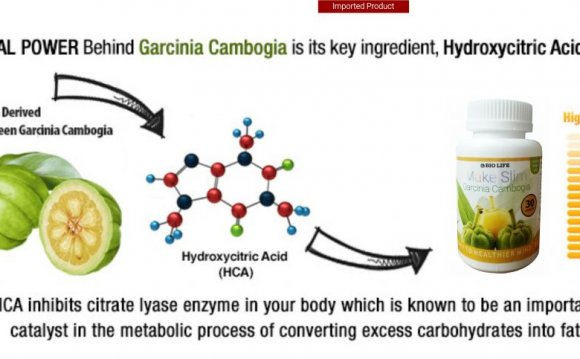 Research Verification Garcinia Cambogia where to Buy