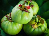 Research on Garcinia Cambogia